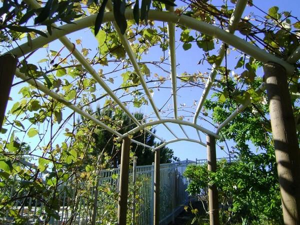 арка для винограда своими руками фото