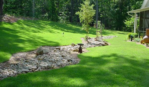 как правильно сделать газон на даче фото