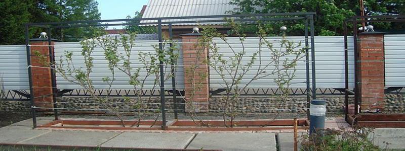 Шпалера для винограда своими руками на даче: из чего и как изготовить