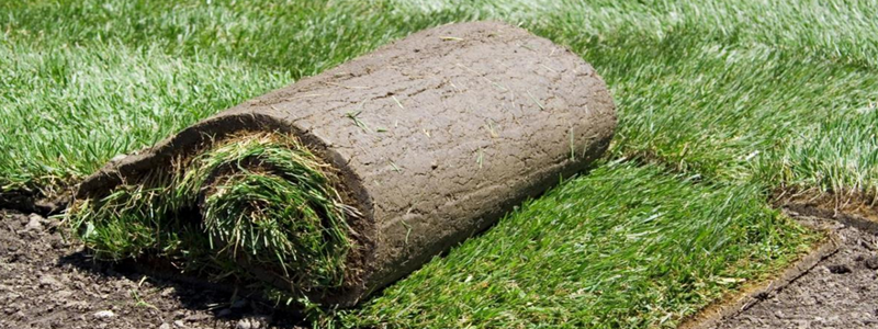 Укладка рулонного газона своими руками: технология