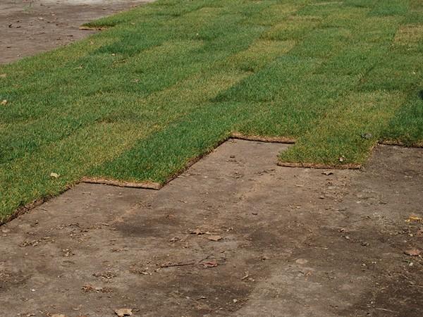 рулонный газон своими руками на даче фото