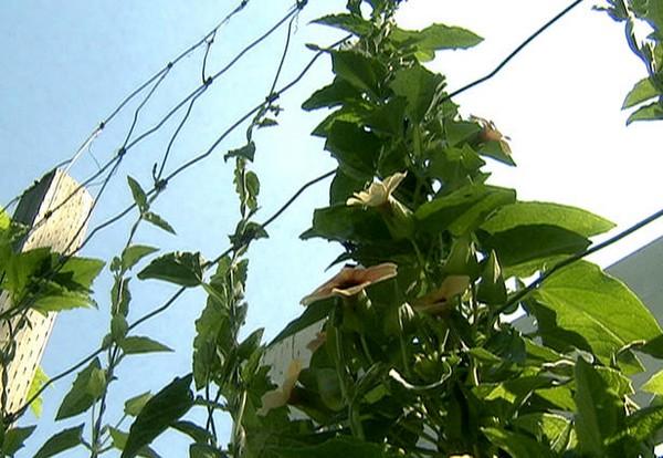 сетка опора для вьющихся растений фото