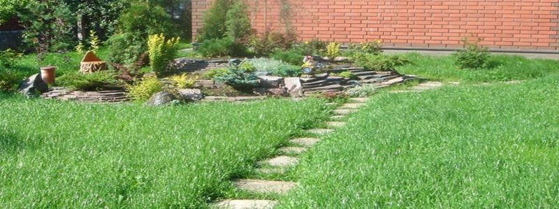 Устройство газона: весь процесс от начала и до конца