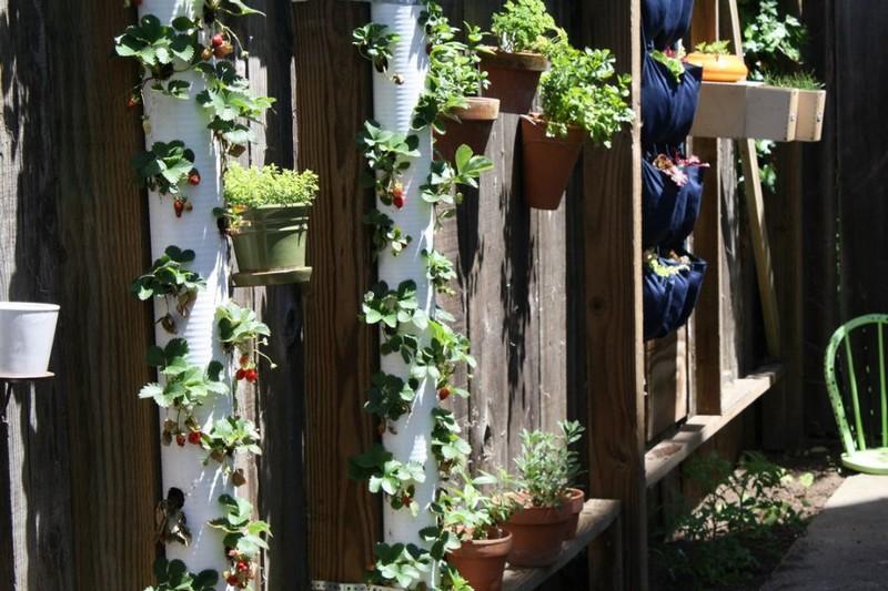 вертикальное озеленение своими руками фото