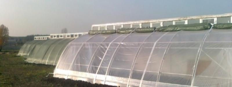 Теплица термос: ее особенности и самостоятельное строительство на даче