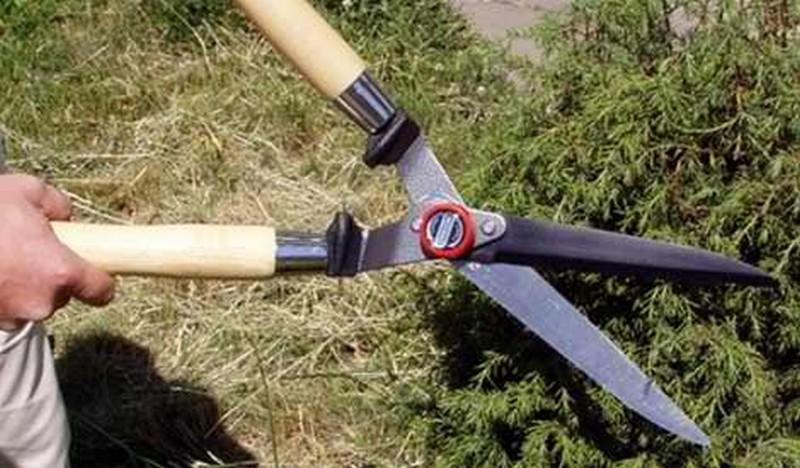 садовые ножницы фото