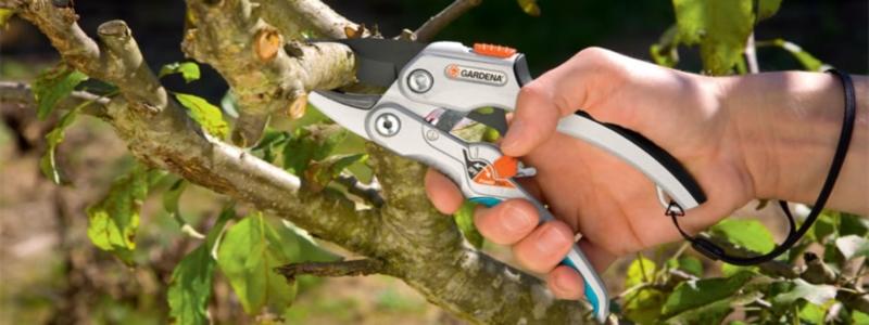 Как выбрать садовый секатор: выбираем инструмент для дачи