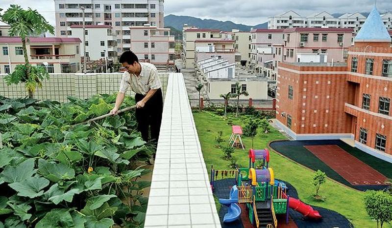 устройство садов на крыше фото
