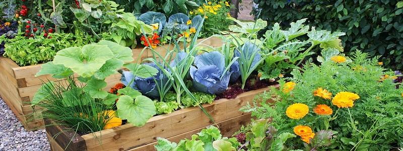 Декоративный огород: как правильно его обустроить