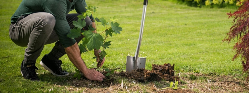 Садовая лопата: как выбрать для дачи
