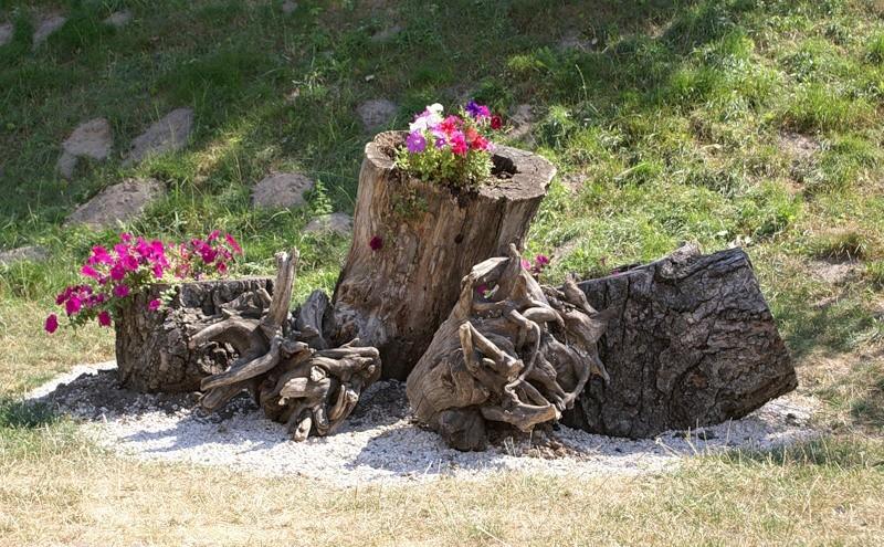 сад корней рутарий фото