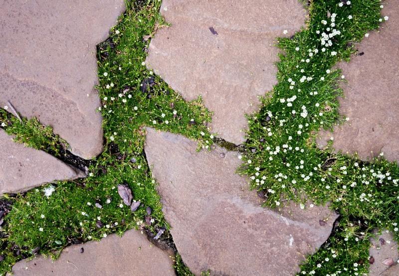 как вывести мох на садовом участке фото