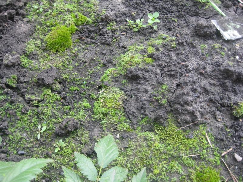 почему на садовом участке растет мох