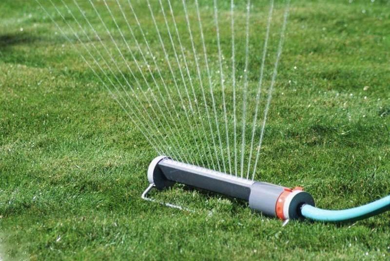 как посеять газонную траву фото