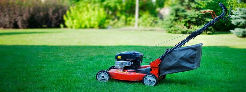 Уход за газоном: правила и рекомендации
