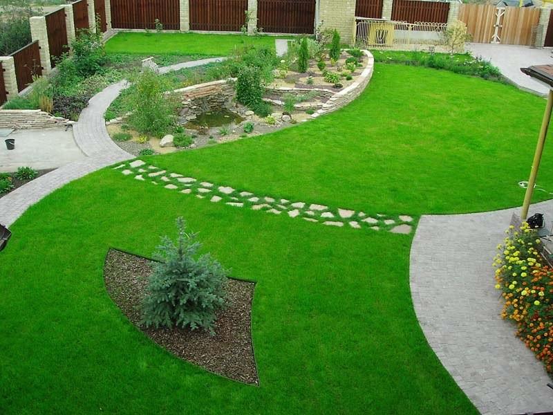 какая газонная трава лучше
