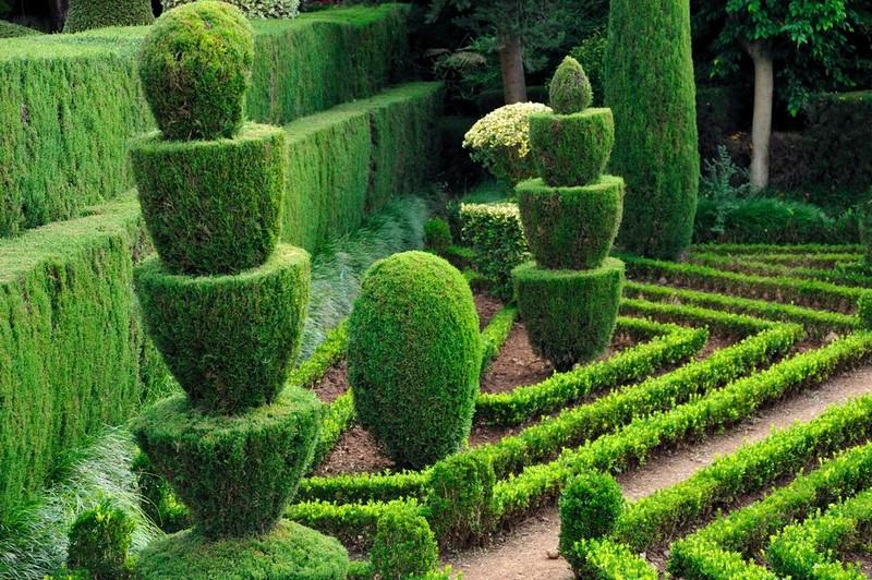 декоративное озеленение дачного участка фото