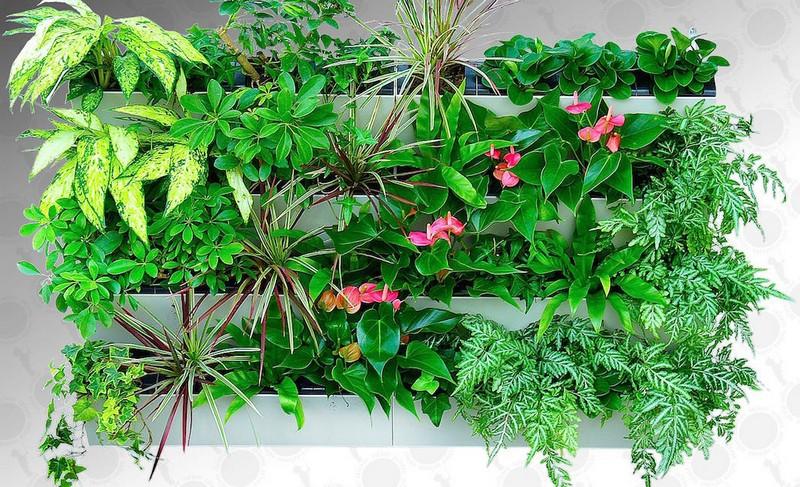 фитомодули для цветов фото