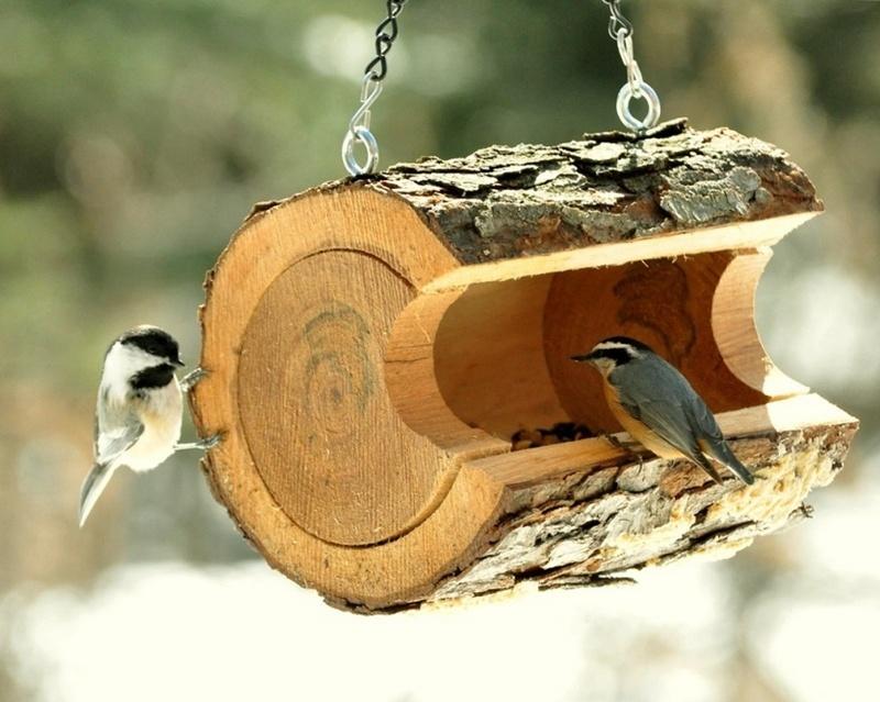способы изготовления кормушек для птиц