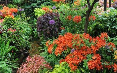 Английский сад и его обустройство на даче