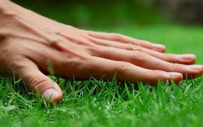Виды газонов: выбираем лучший для дачи