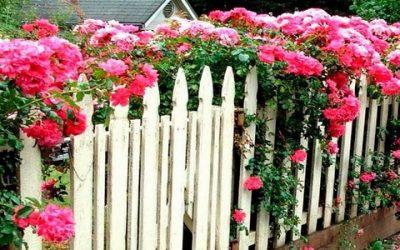 Что посадить вдоль забора на даче: деревья или цветы