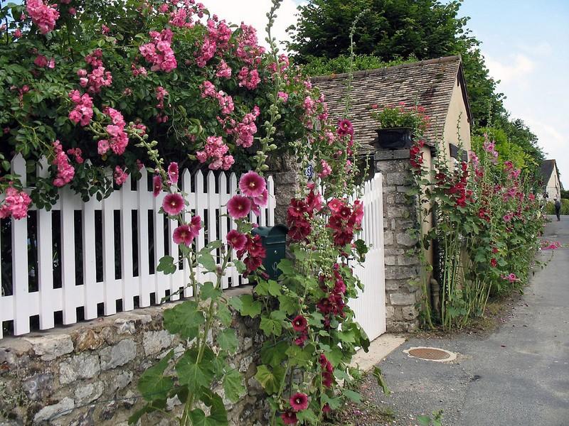 какие растения посадить вдоль забора на даче фото