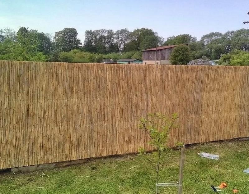 камышовый забор фото