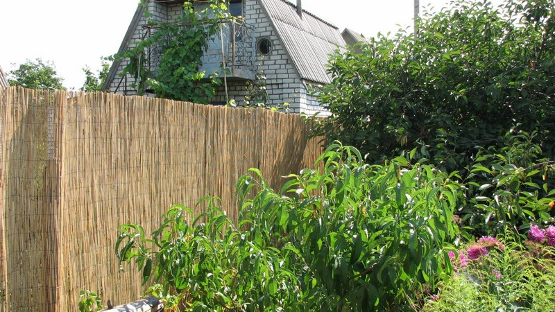 забор из камыша фото