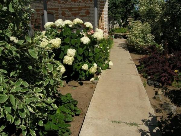 устройство садовых дорожек из бетона фото