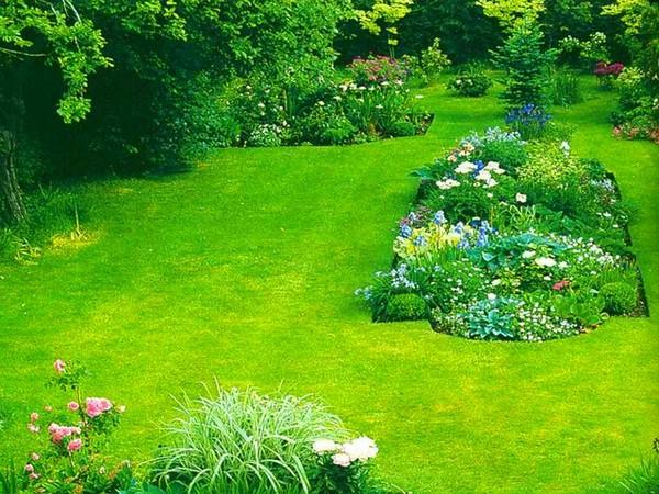 какой газон посадить на даче фото