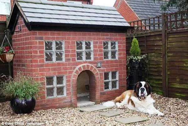 как построить будку для собаки на зиму фото