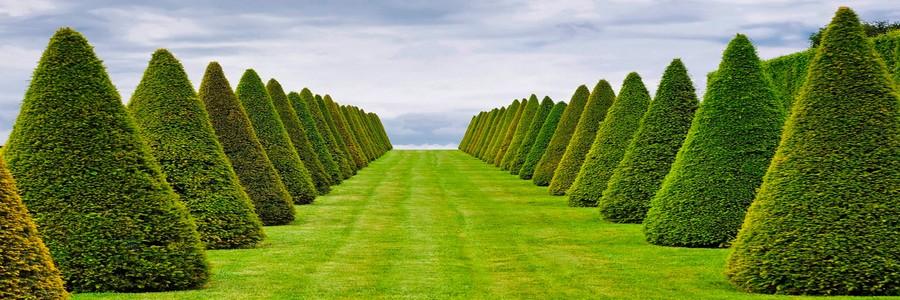 Вертикальное озеленение своими руками: простые и сложные идеи для дачи