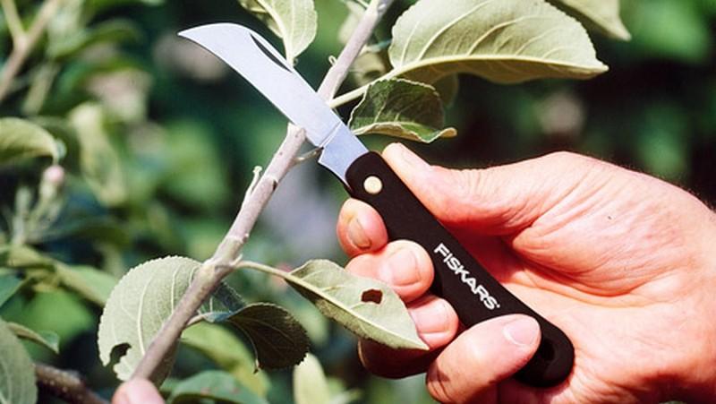 прививочный нож фото