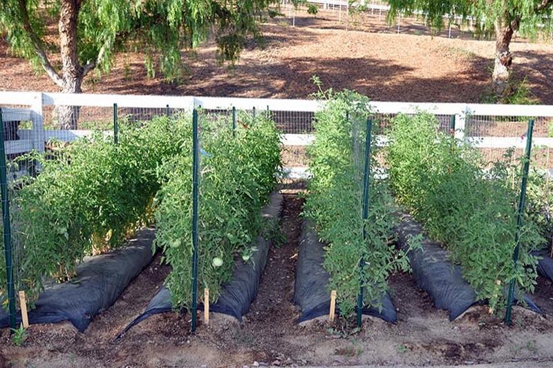 Шпалеры для томатов своими руками