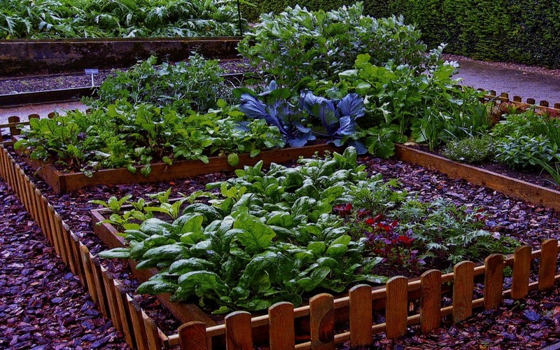 планировка декоративного огорода фото