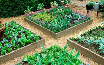 Дорожки в огороде: какие и как сделать своими руками