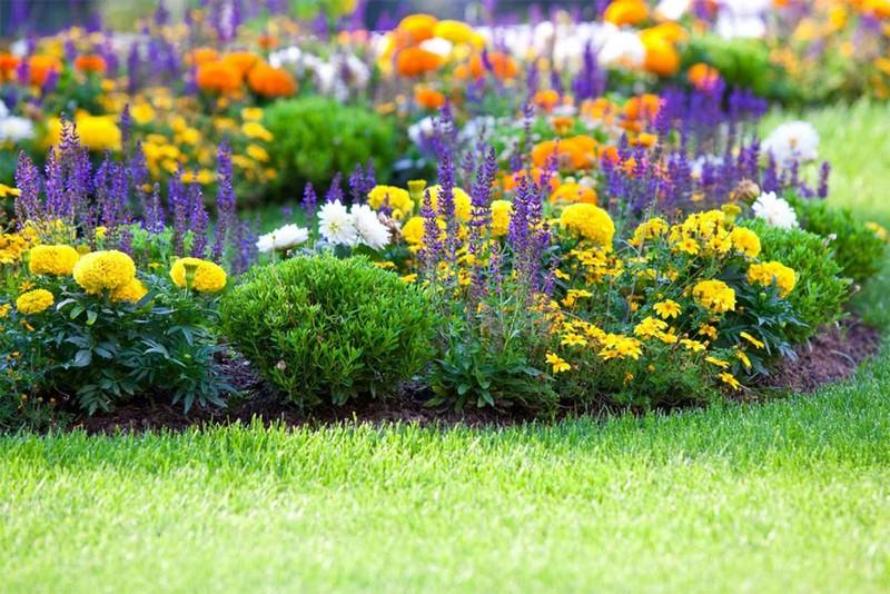 растения для миксбордера фото