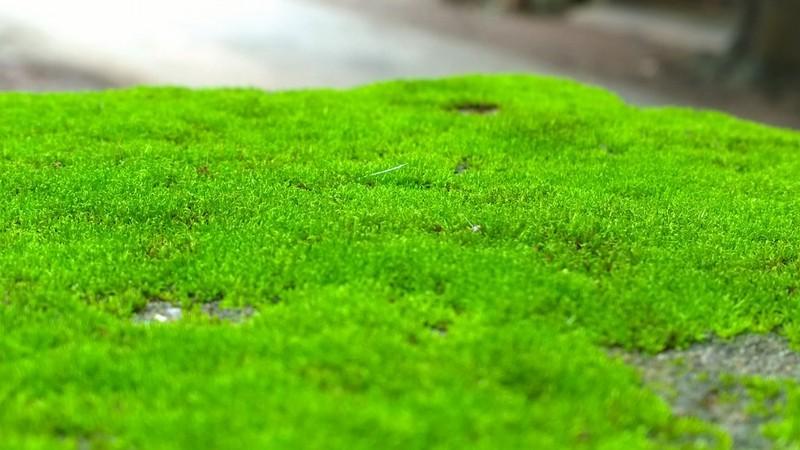 как избавиться от мха на садовом участке фото
