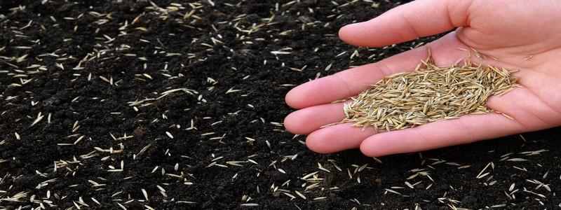 Как сажать газонную траву: от подготовительных работ до первых ростков