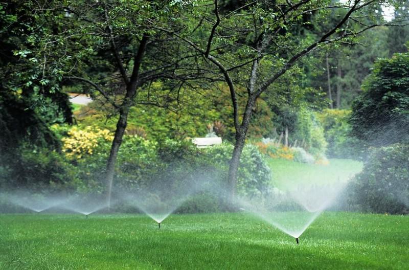 как поливать газон фото