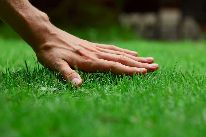 как правильно сажать газонную траву на даче