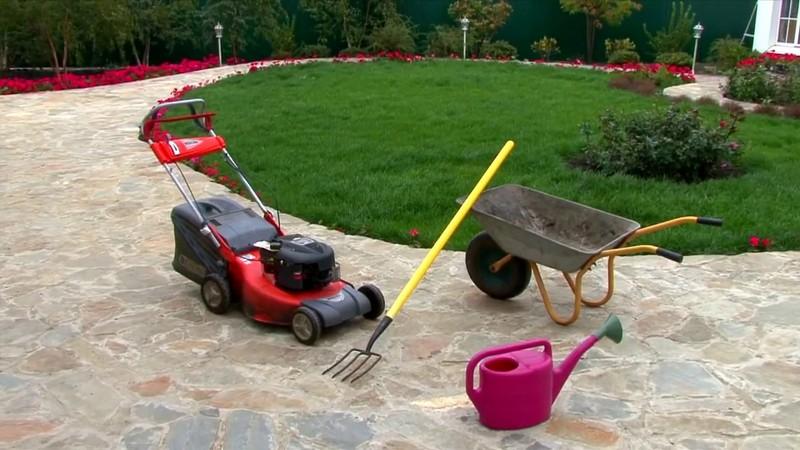 как ухаживать за газонной травой фото