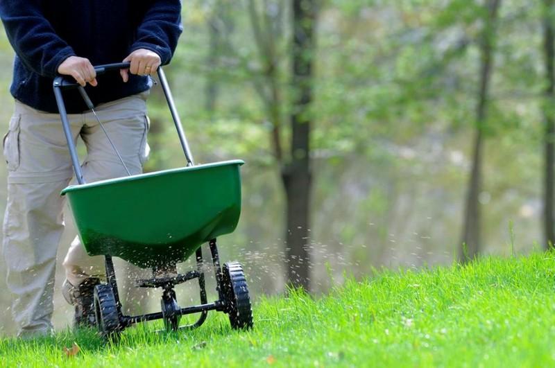 удобрение газонной травы фото