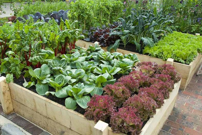 красивый огород на даче фото