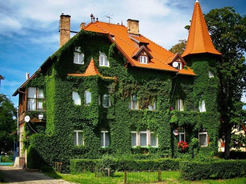 вертикальное озеленение дачного дома фото